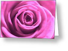 Soft Touch Pink Rose Greeting Card