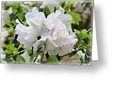 Soft White Azaleas Greeting Card