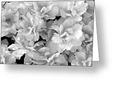 Soft Whites Greeting Card