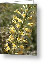 Soft Yellow Desert Flowers Greeting Card