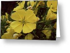 Soft Yellow Flowers Greeting Card