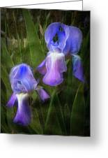 Softly Growing In The Garden Greeting Card