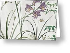 Softly Purple Crocus Greeting Card