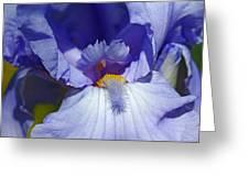 Softly Purple Greeting Card