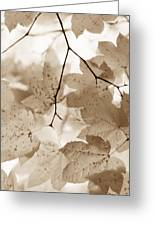 Softness Of Brown Maple Leaves Greeting Card