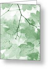 Softness Of Green Leaves Greeting Card