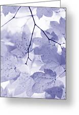 Softness Of Lavender Leaves Greeting Card