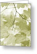 Softness Of Olive Green Maple Leaves Greeting Card