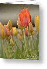 Softness Of Spring Greeting Card
