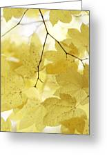 Softness Of Yellow Leaves Greeting Card
