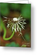 Soggy Dandelion Greeting Card