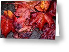 Soggy Leaves Greeting Card