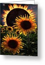 Solar Corona Over The Sunflowers Greeting Card