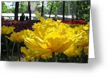Solar Tulip Greeting Card
