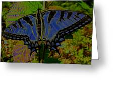 Solarized Butterfly Greeting Card