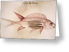 Soldier-fish, 1585 Greeting Card