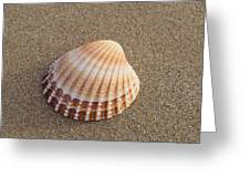 Solitary Cockle Shell Greeting Card