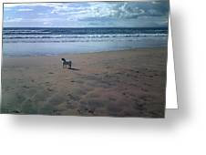 Solitary Doglooking To America Greeting Card