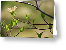 Solitary Dogwood Bloom Greeting Card
