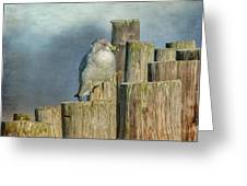 Solitary Gull Greeting Card