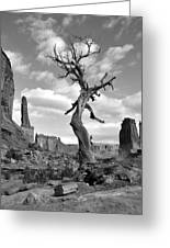 Solitary Park Avenue Tree - Bw Greeting Card