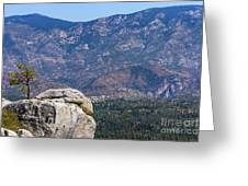 Solitary Pine On Promontory Greeting Card
