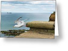 Solitary Seagull Take-off Greeting Card