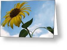 Solitary Sunflower From Below Greeting Card