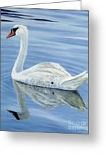 Solitary Swan Greeting Card