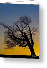 Solitary Tree At Sunset Greeting Card