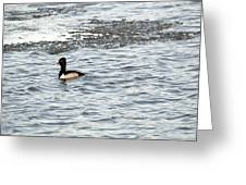 Solo Duck Greeting Card