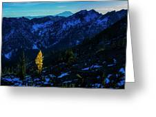 Solo Larch 2 Greeting Card