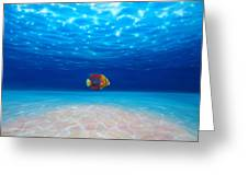 Solo Under The Sea Greeting Card