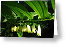 Solomon's Seal Greeting Card