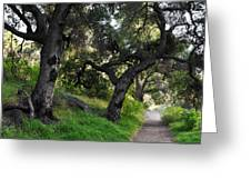 Solstice Canyon Live Oak Trail Greeting Card