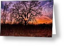 Somenos Oak Greeting Card