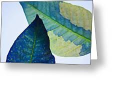 Something Blue Greeting Card by Bobby Villapando