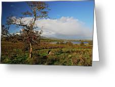 Somewhere In Ireland Greeting Card