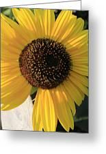 Son Of A Sun Greeting Card