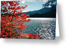 Song Of The Fall. Greeting Card