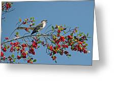 Song Of The Mockingbird Greeting Card