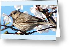 Song Sparrow Dining Out Greeting Card