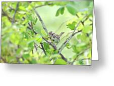 Song Sparrow With Dinner Greeting Card