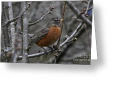 Songbird Evening Greeting Card