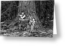 Songs In The Woods Greeting Card