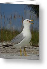 Songs Of The Gull Greeting Card