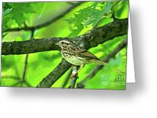 Songsparrow In Spring Greeting Card