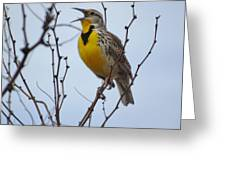 Songster Greeting Card