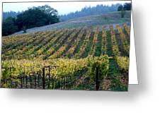 Sonoma County Vineyards Near Healdsburg Greeting Card