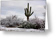 Sonora Desert Winter Greeting Card